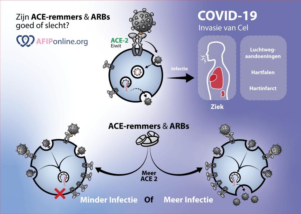 Covid-19 infiltreert in cel via ACE2. ACE-remmers en ARB zorgen voor meer ACE2. ACE2 beschermt cellen.