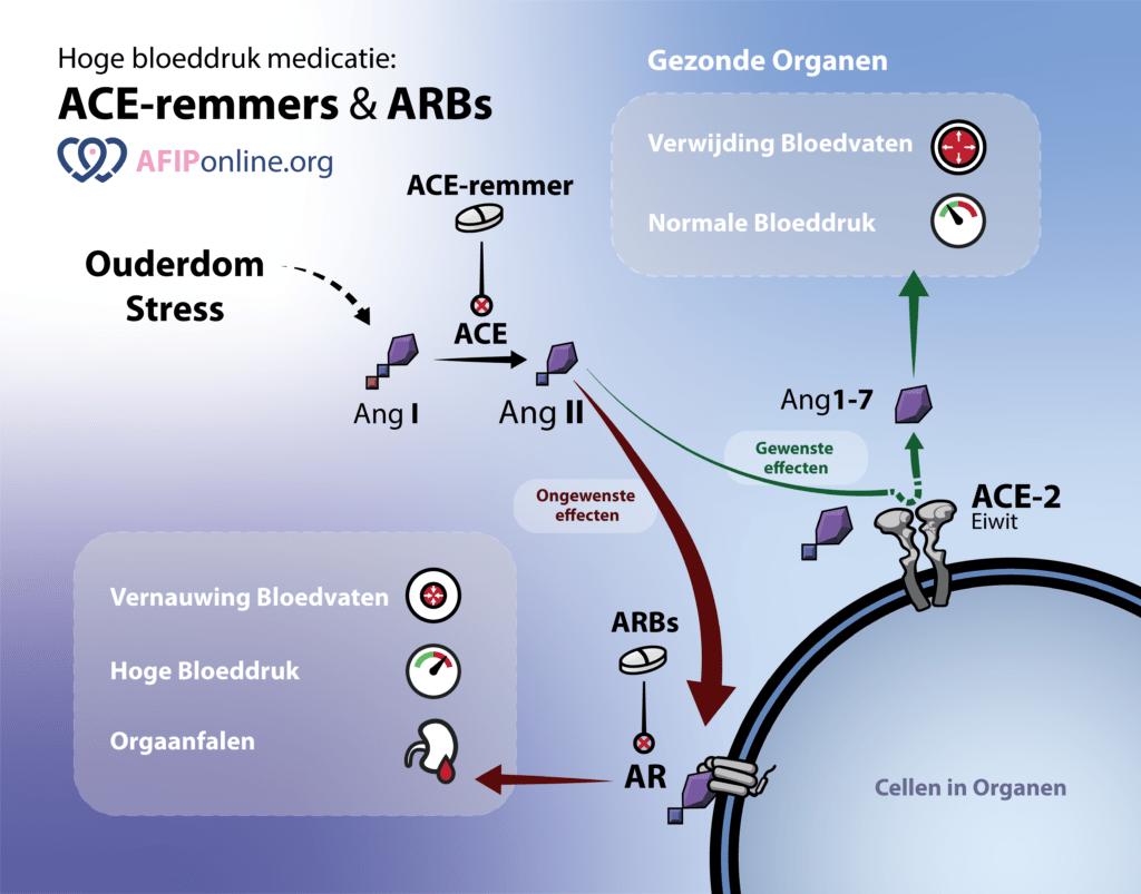ACE-remmers en ARB verlagen bloeddruk en orgaanschade en verhogen ACE2