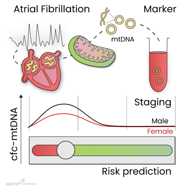 mtDNA levels are marker for atrial fibrillation
